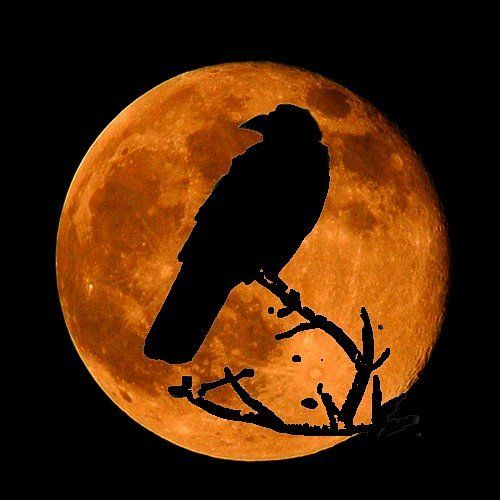 orange moon, black bird
