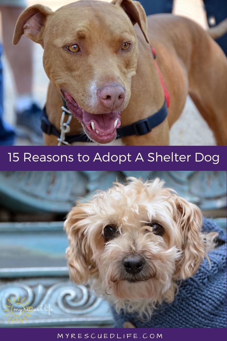 Top 15 Reasons To Adopt A Shelter Dog Shelter Dogs Dog Adoption Dogs