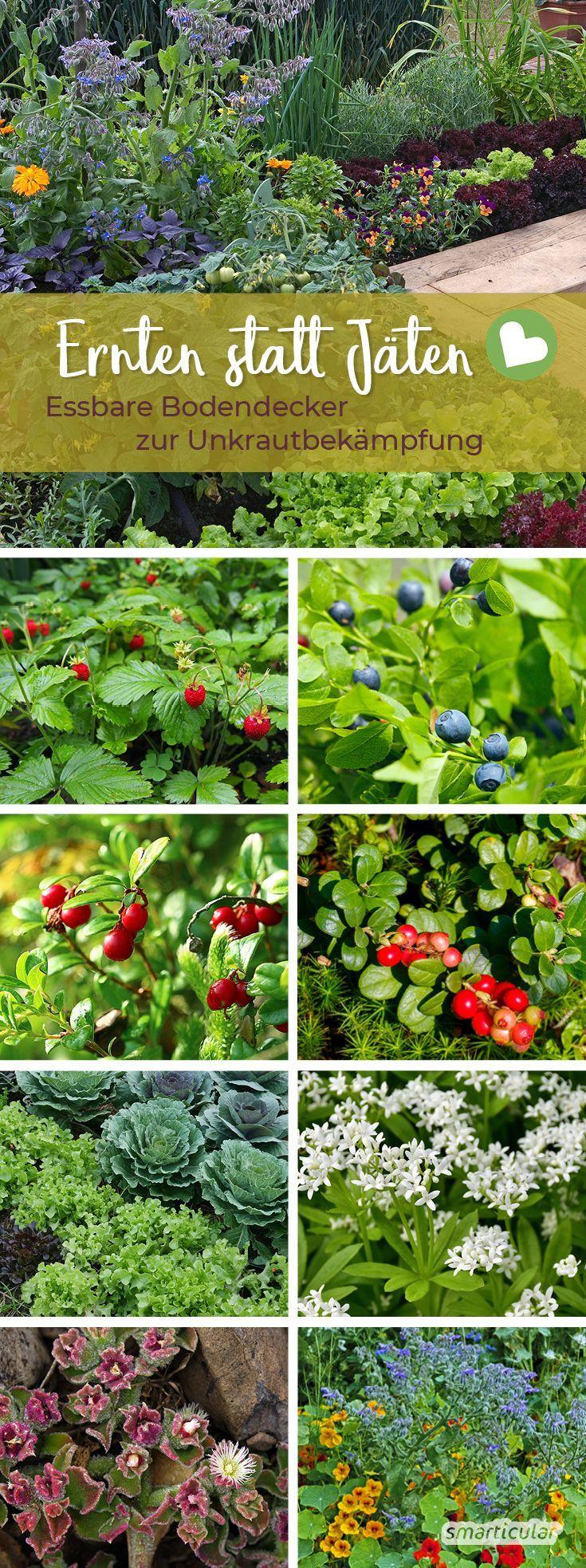 Diese Pflanzen halten das Unkraut fern und schmecken köstlich