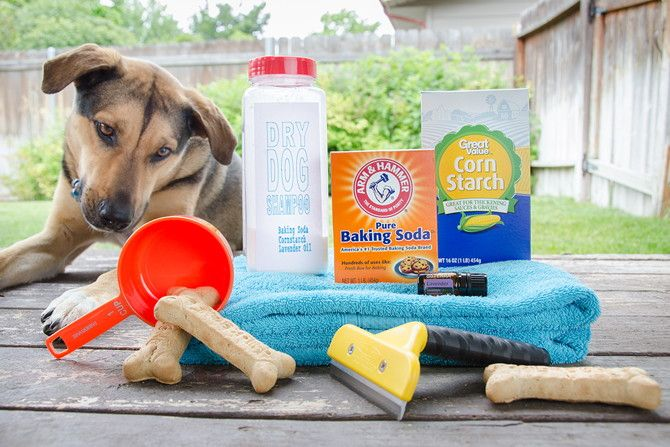 1. Make your own dry dog shampoo with baking soda, cornstarch, and lavender essential oils.