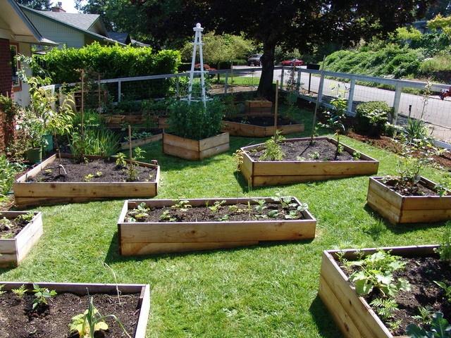 Garden Bed Edging Plants