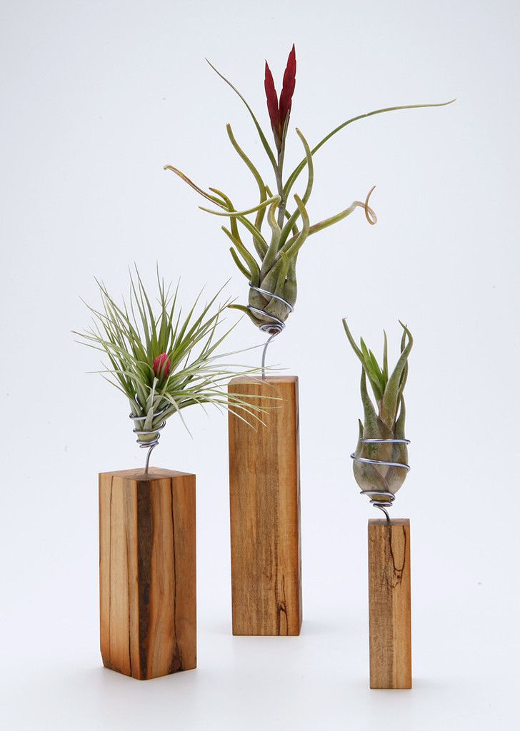 AirplantVessel in hand finished wood - Hand wired stand that can be removed to soak the air plant