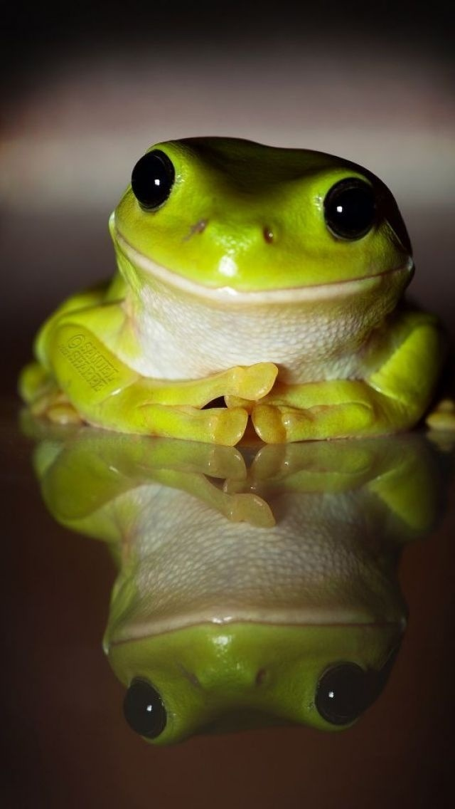 17 best images about funny frogs on pinterest in pictures cute frogs and high five - Funny frog pictures ...