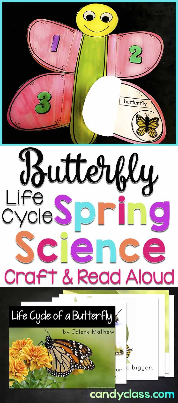With this fun butterfly craft, students add details about the life cycle of a butterfly. There is also a non-fiction read aloud book that you can project on your Smartboard or print to read. This fun craftivity and reading response activity is perfect for some spring science learning. Use with kindergarten, first grade, and 2nd grade classrooms.