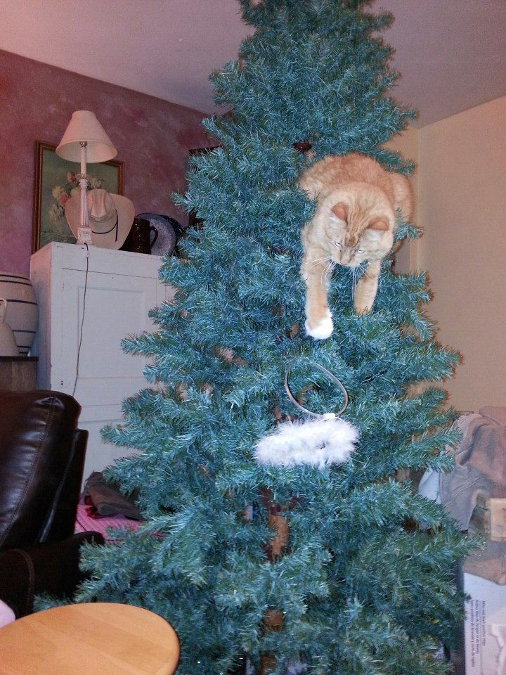 The Amazing Spider-Cat. A Hilarious Compilation Of The Constant Battle Between Cats & Christmas Trees • Page 3 of 5 • BoredBug