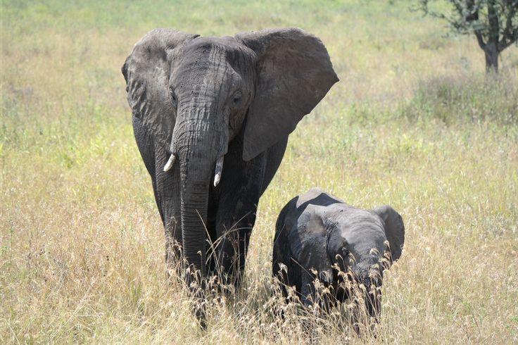 Serengeti, Tanzania (2014)