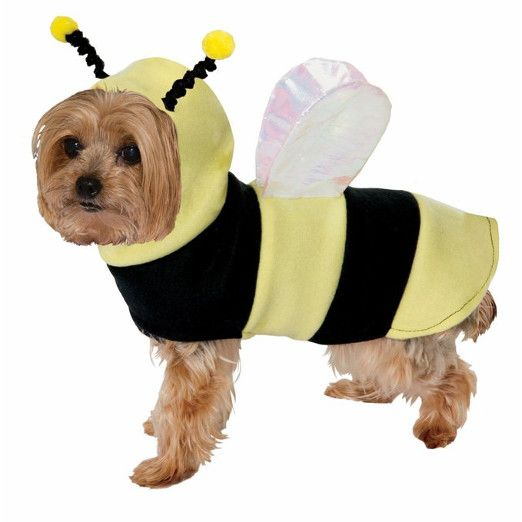 22 hilarious pet costumes you have to see dog halloween