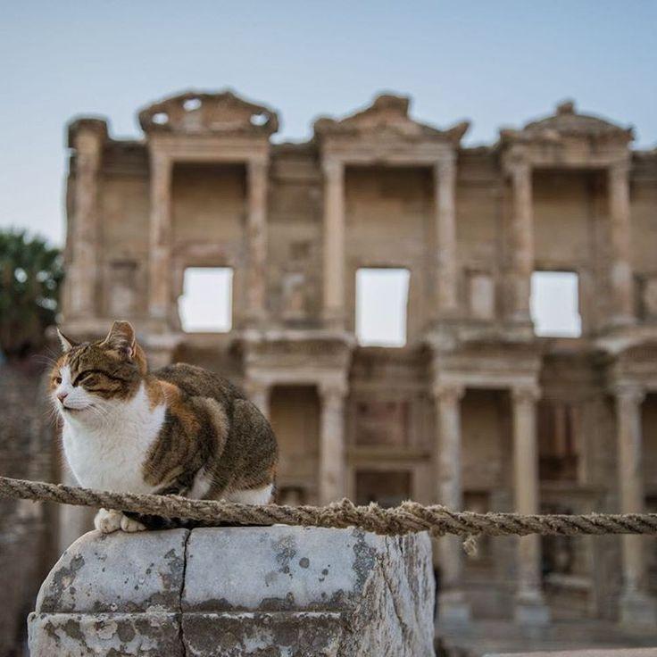 cats, kitty, kitty cat, caturday, turkey, ephesus, selcuk, izmir