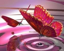 Image result for images of butterfly with water