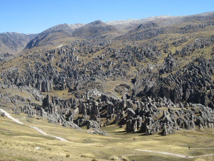 El Bosque de Piedras de Corani, de la provincia de Carabaya,  es considerado  único en el mundo, donde se halla diferentes figuras desde diferentes ángulos y pinturas rupestres que desde hace 14 años, están siendo estudiados por los expertos.
