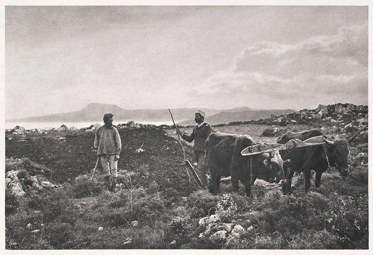 1919 Χανιά, όργωμα στο Ακρωτήρι με τον τρόπο του Ησιόδου! Πίσω φαίνεται η Δραπανοκεφάλα, Φωτογραφία του Fred Boissonas.