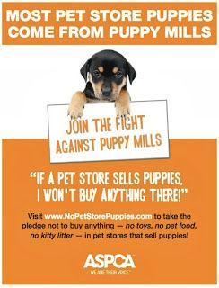 ASPCA celebrates No Pet Store Puppies Day