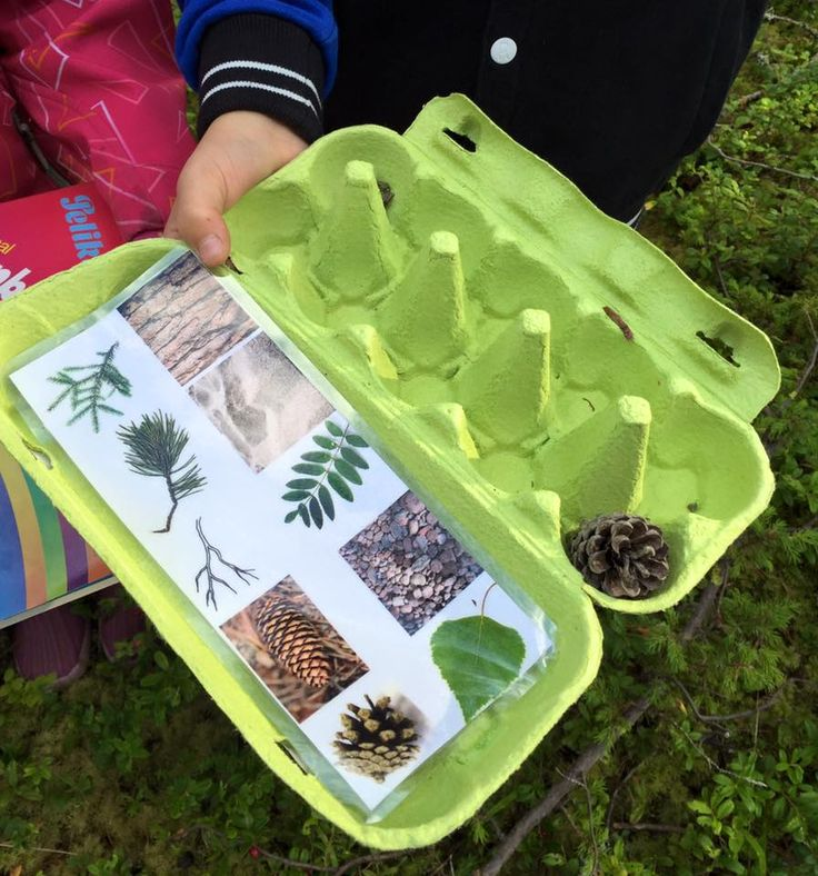 Metsäretkellä oppilaat keräsivät näytteitä luonnosta kananmunakennoihin. (Alkuopettajat FB -sivustosta /Eeva Hiltunen)