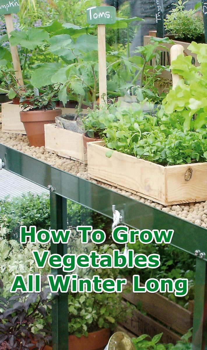 11707 besten container gardening bilder auf pinterest gardening