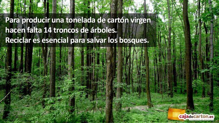¿Sabías que para producir una tonelada de cartón virgen hacen falta 14 troncos de árboles? Reciclar es esencial para salvar los bosques.