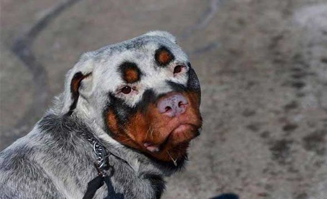 These 33 Dogs With The Most Unique Coats On Earth Took My Breath Away. My Favorite Is #7! - Eye Opening Info