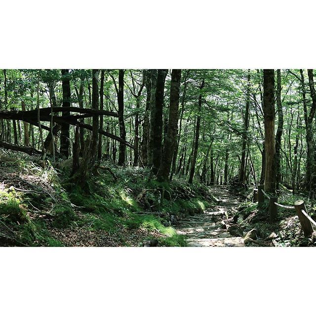 【kouta_kashigi】さんのInstagramをピンしています。 《#奈良 #上北山村 #大台ケ原山 #大台ケ原 #登山道 #森 #自然 #ig_japan #jp_views #instadaily #memories #recordvisited #photography #instafhoto #nara #kamikitayama_village #odaigahara #odaigahara_mountain #climb #forest #nature  #誰かに見せたい風景 #canon#eosm3#canonphotography》