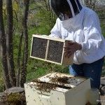 Beginner Beekeeper's Guide   Beverly Bees--I have a healthy respect and love for bees (thanks to my dad, the organic gardner :-) ) and would love to keep bees.  This looks like a great site.