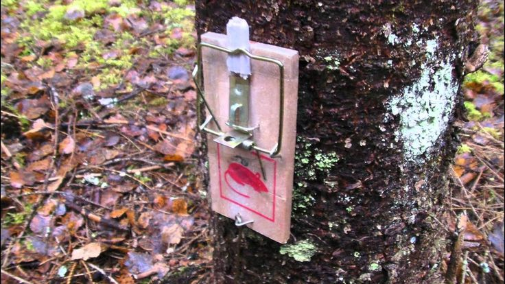 Camping - How to make an intruder alarm.