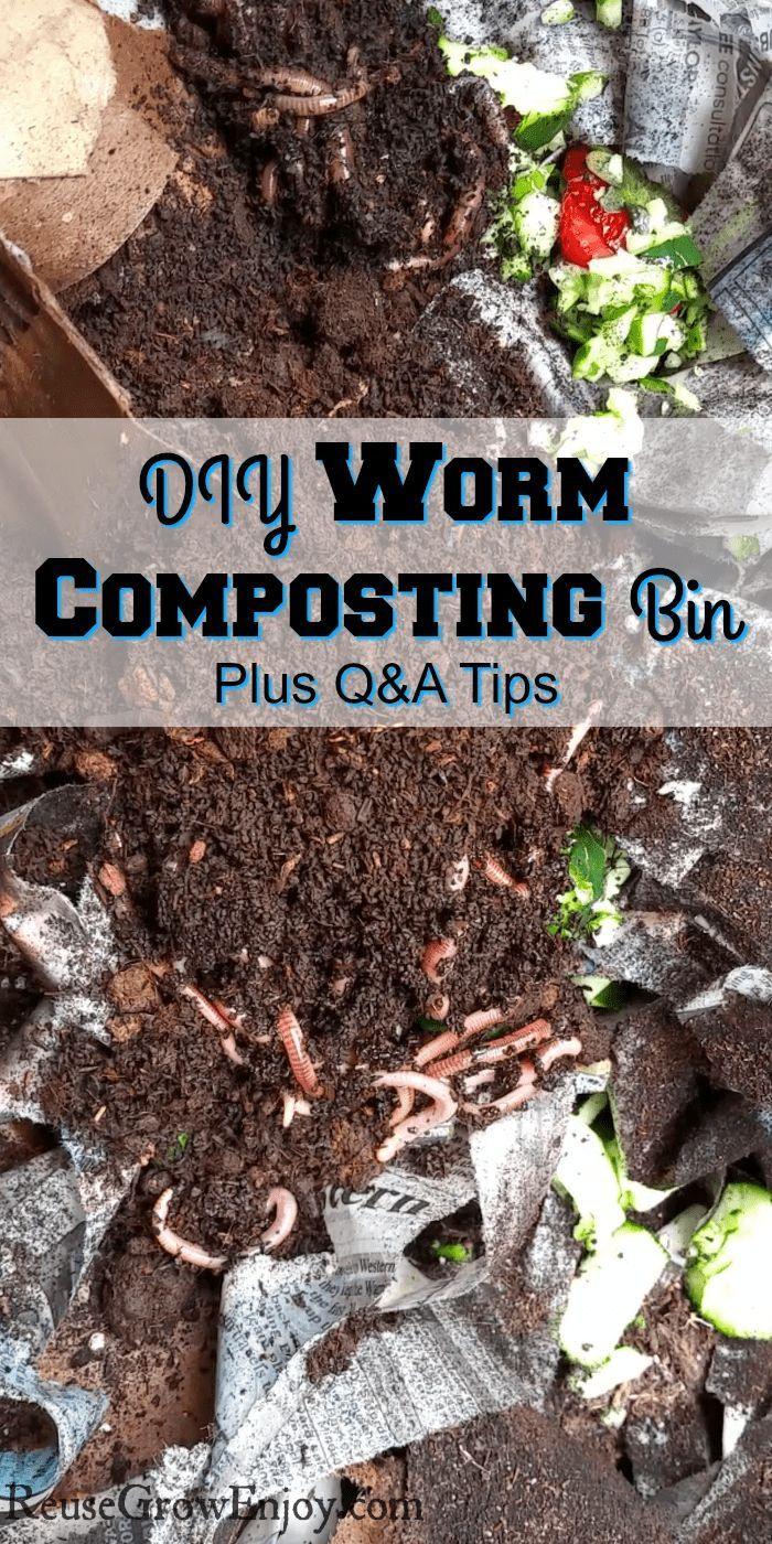 Looking To Start Your Own Worm Composting Bin And Wanting To Know