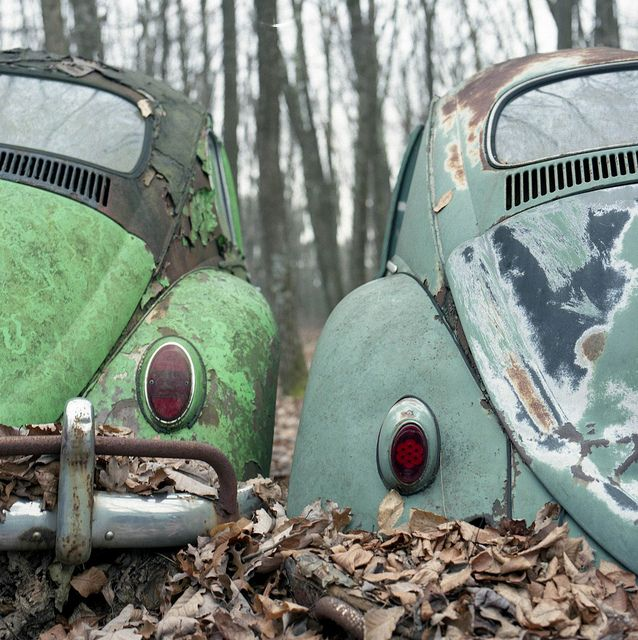 2 VW Beetles Rusted forest.      Totally thought these were turtle statues in a garden