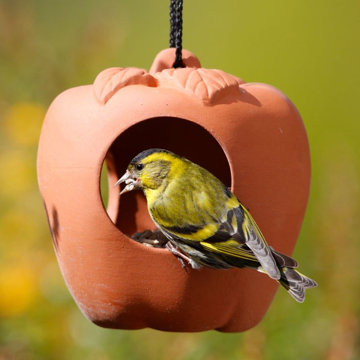 terracotta apple bird feeder garden nurture nature