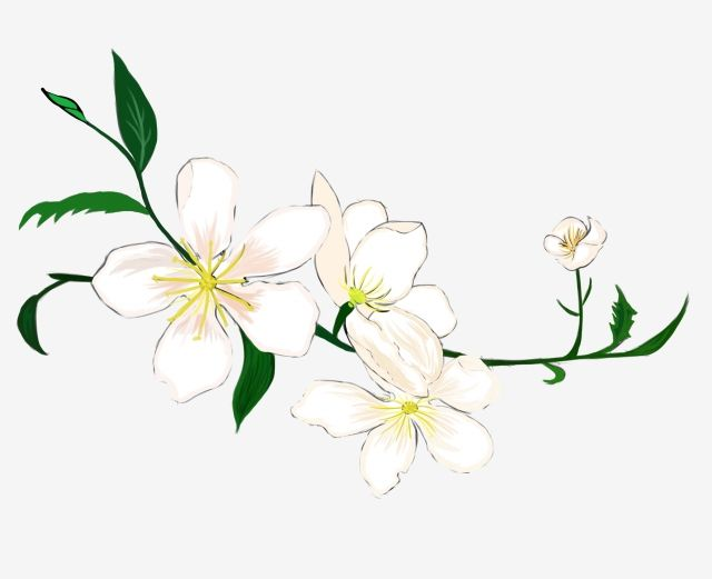 Flowers Real Flower White Flowers Petal Yellow Flower Flower Core Green Foliage Png Transparent Clipart Image And Psd File For Free Download Watercolor Flower Background Yellow Flowers Flowers Petals
