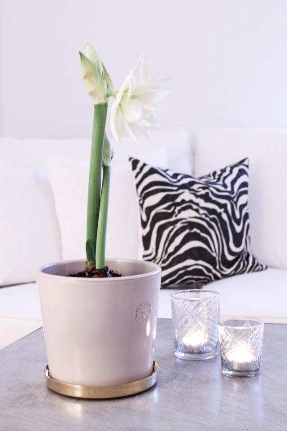 zebra kudde svenskt tenn - Sök på Google