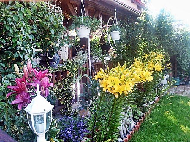 Rośliny i ogród, wyjątkowy dom - ogród