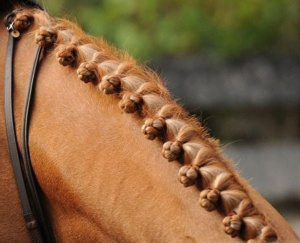 braided horses - Google Search | Braided Manes and Tails ...