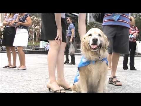 The Big Brisbane Beg for the Million Paws Walk 2013