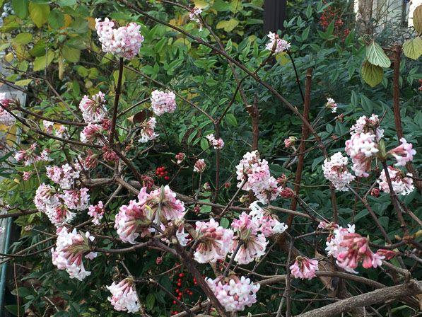 the 25+ best arbuste fleuri ideas on pinterest | arbuste haie