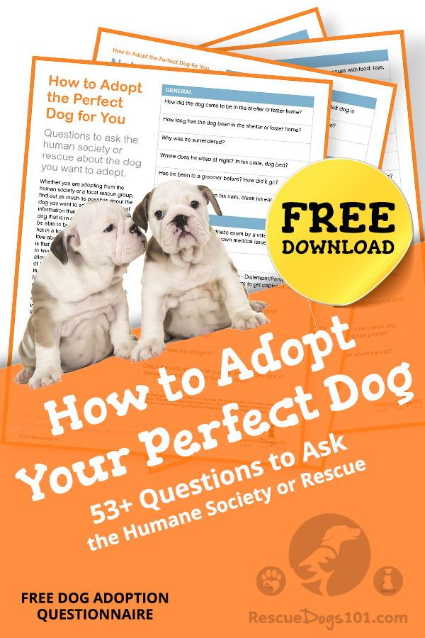 Adopt Your Perfect Dog Dogs Rescue Dogs Rescue Puppies