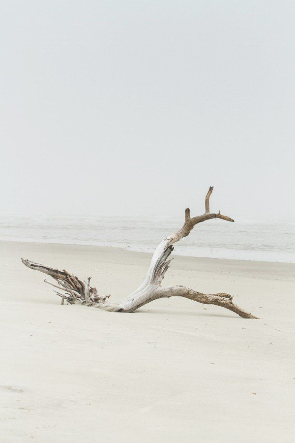 Little Tybee Island | Sundial Charters | Mermaid Cottages | Driftwood