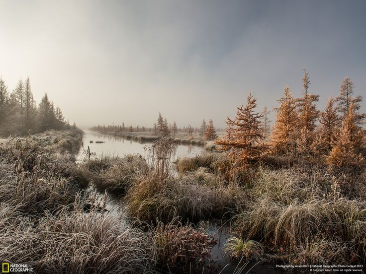 Fotografia di Adam Dorn Mather, Wisconsin, Stati Uniti   Le paludi Tamarack in un'alba invernale.