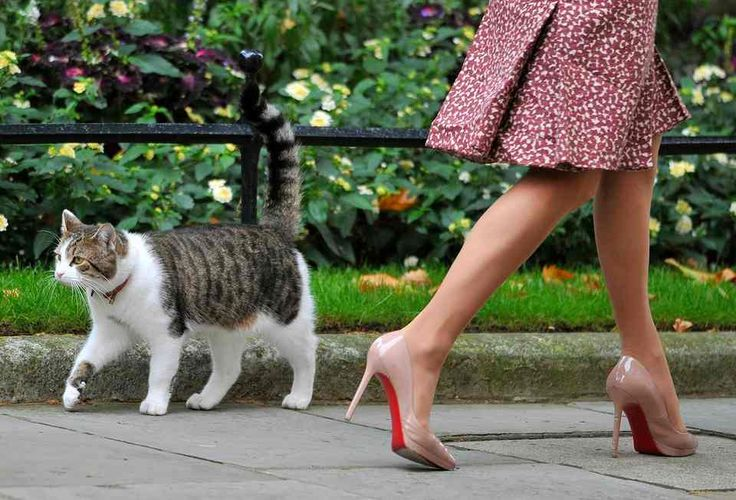 Larry, walks past a woman in Downing Street