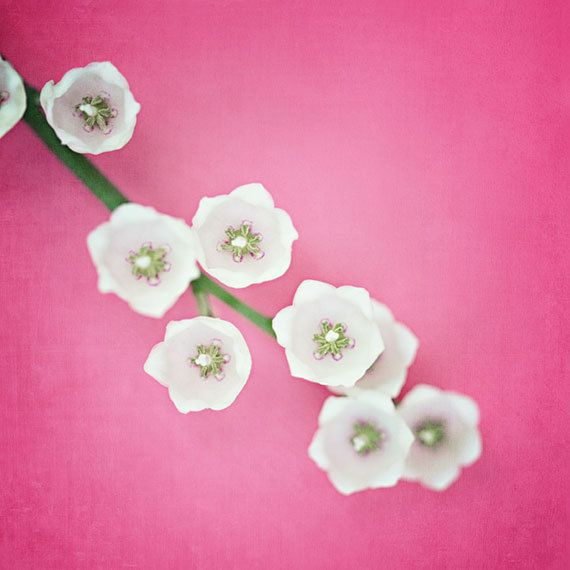 Nursery Decor  Pink Picture  Easter Colors by LisaRussoPhotography, $25.00