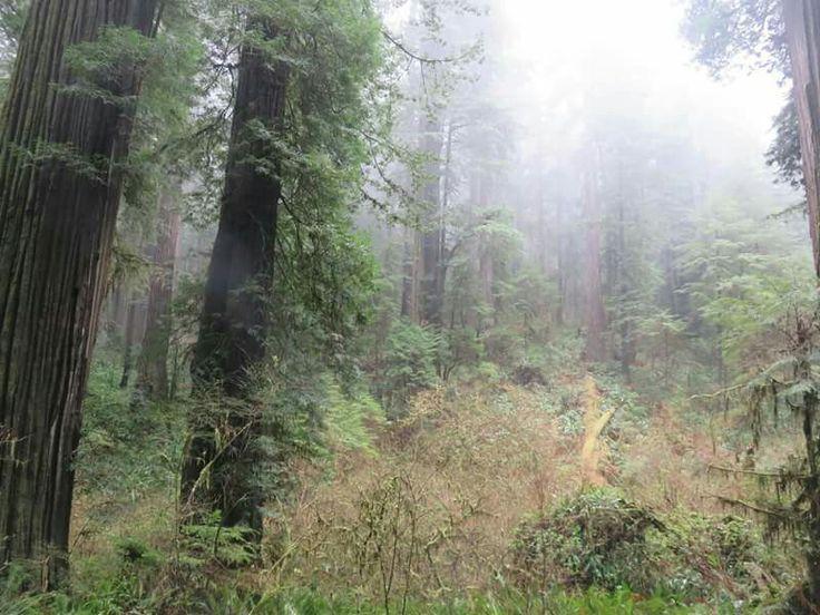 Jeremiah smith redwoods stout grove near gold beach oregon