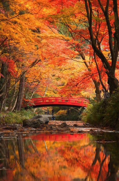 Shu-chi, Shizuoka, Japan 静岡県周智郡