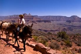 Mule ride through the Grand Canyon