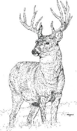 Buck - pen and ink by Stephen Brooke