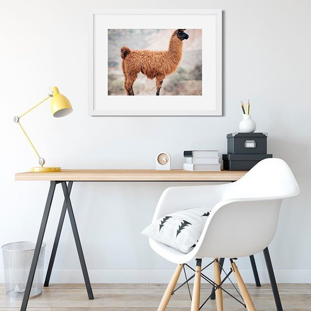 Another Llama print! We have 3 different llama prints up on the site now, all ready for instant download so you can have in your home ASAP. Link in profile.  •  •  •  #llama #etsymagazine #mumpreneur #etsylent #etsyseller #etsysellersofinstagram #etsyshop #etsystore #digitaldownload #instantdownload #diydecor #diywallart #wallart #poster #etsyfinds #interiors #diyinterior #llamaprint #llamaprofile #animalprint #officespace #officeinteriors
