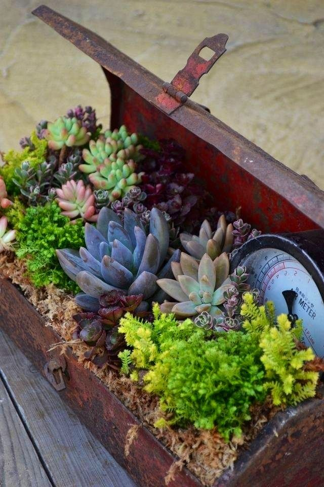 Succulent garden in an old metal tool box