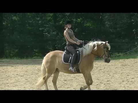So verbessere ICH meinen Sitz // Impressionen Centered Riding die 5. //UNCUT - YouTube