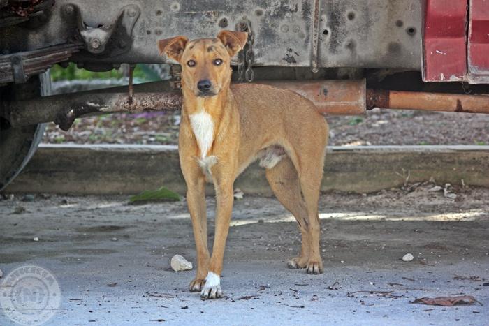 Beautiful little dog under a car in Bonfil/Cancun Mexico