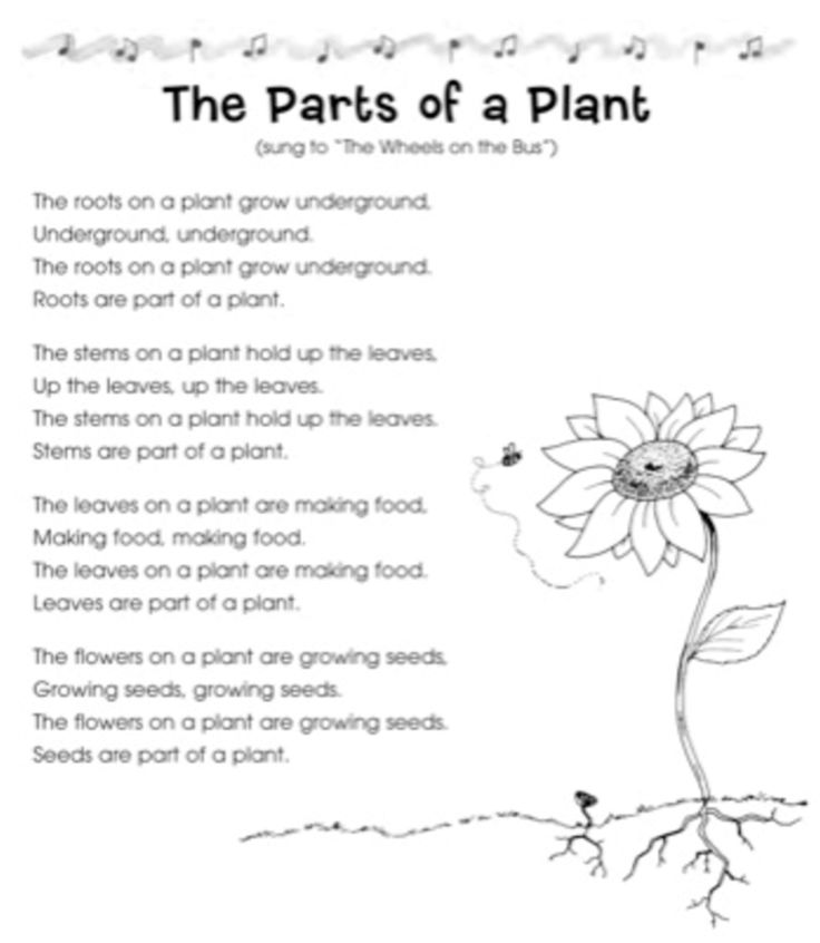 "The Parts of a Plant Song: to the tune of ""The Wheels on the Bus"""