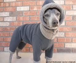 A Succinct Overview Of Italian Greyhound Clothes