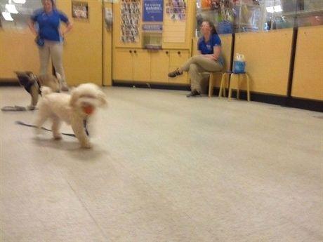 Dog Training Attack Dog Training 08081 Dog Training Cesar