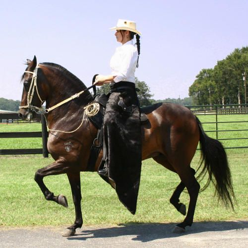 The Paso Fino horse to be found in Puerto Rico is unique in the world. It has a number of features that differentiate it from the others: small head, ears up, as if they were on alert, medium body long, thin legs-but-firm, a mane and a tail and a character lakes meek and docile, that make it unique.