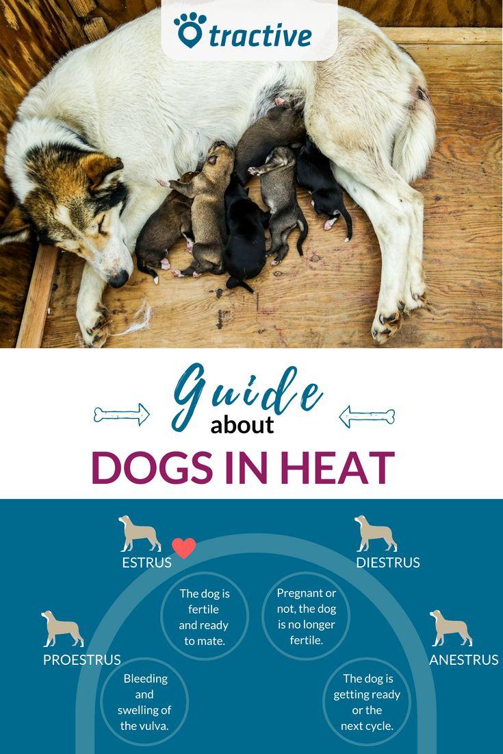 The 25+ Best Dog In Heat Ideas On Pinterest